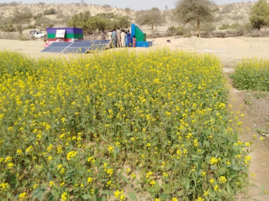 Green Farm in Thar