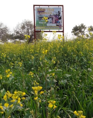Wheat and Vegetable in green farm