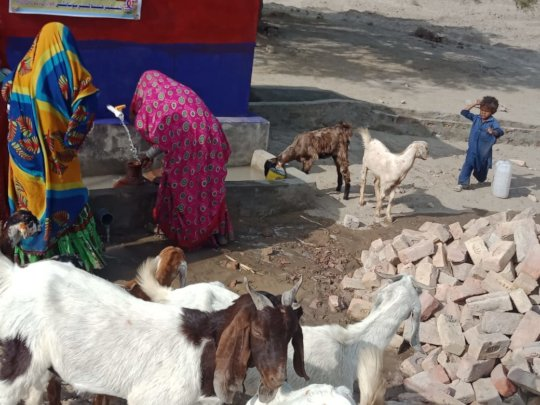 Animals and humans benefiting from the well