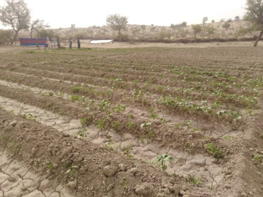 New Green Farm being developed