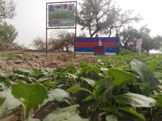 Greenery in the Deserts of Thar
