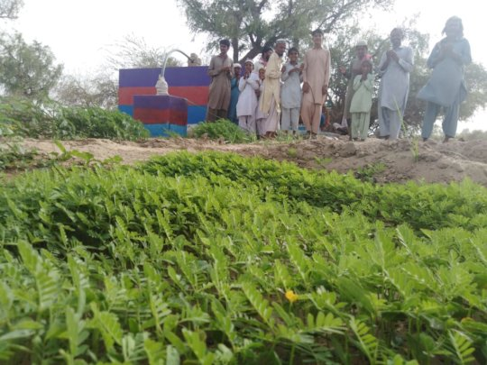 Developed Lush Green Field