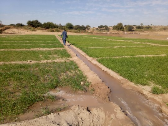 Water being Supplied to Crops