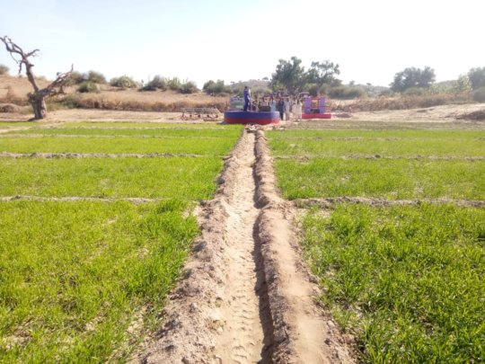 Crops Cultivated in Green Farms of Thar