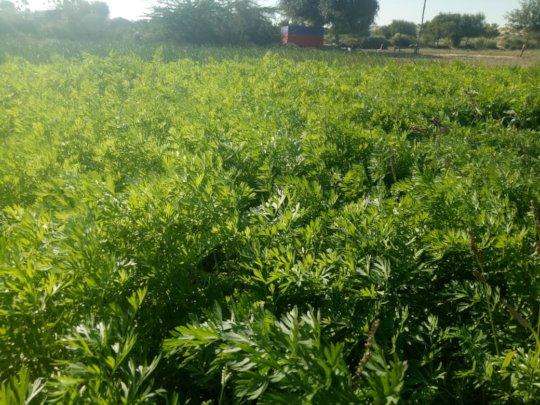 Beautiful View of Green Farm in Thar