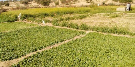 Green Farm Being Developed