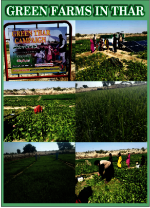 green farms in     thar