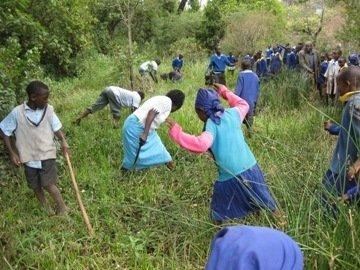 PLANT 19,500 TREES IN 6 SCHOOLS IN MOLO KENYA