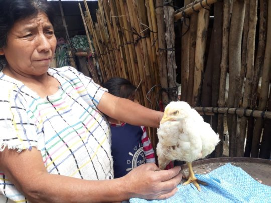 Chickens will provide much needed protein.