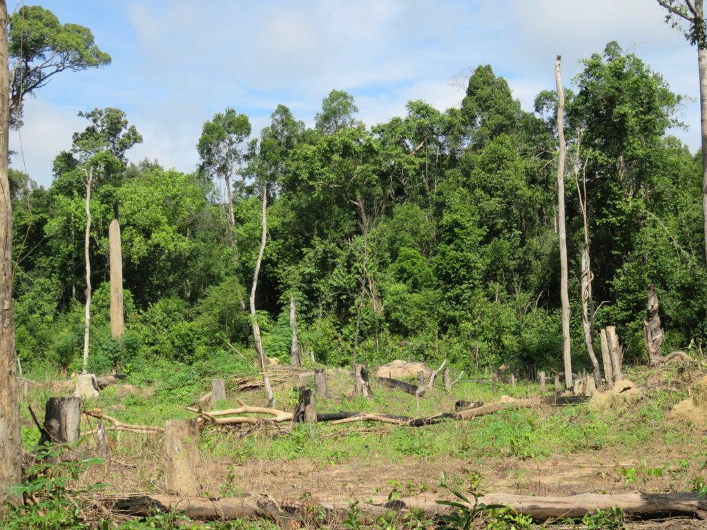 Plant Trees to Restore PreyLang Wildlife Sanctuary