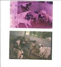 Livestock Rehabilitation
