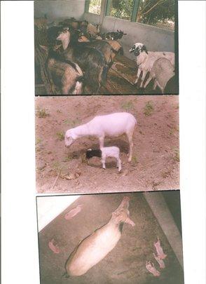 Rehabilitation of Livestock
