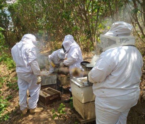 Tipitapa Bee keeping projects