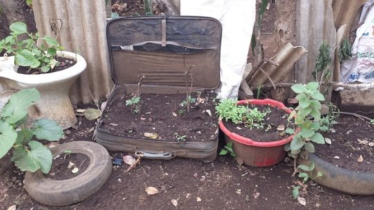 Cedro Galan gardening projects