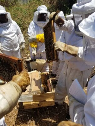 Sweet Progress beekeeping class at the ANF