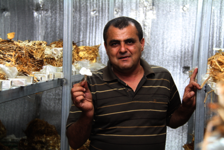 Palestinian participant, Othman, and his mushrooms