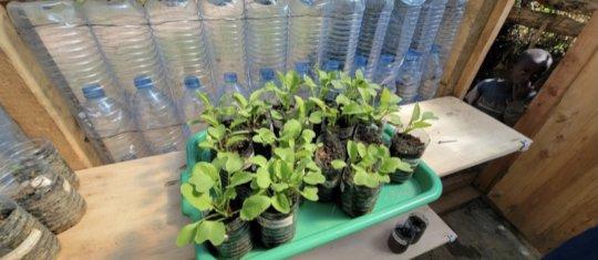 The seedlings are growing!