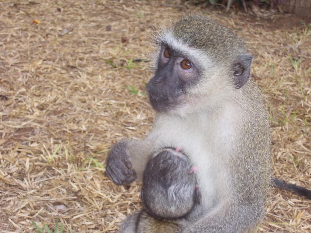 Monkeys keep eating the trees