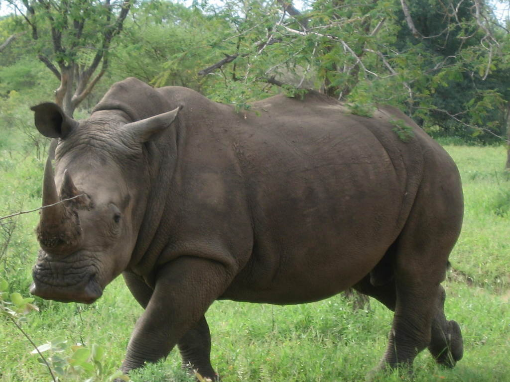 human wildlife conflicts in kenya Human–wildlife conflict refers to the interaction between wild animals and people and the resultant negative impact on people or their resources, or wild animals or their habitat.