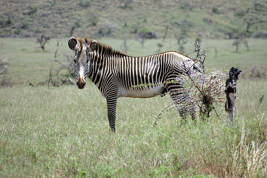Save Endangered Zebras and Help Wild Dogs in Kenya
