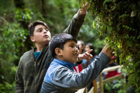 Parque Nacional Alerce Andino Diciembre 2019