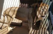 Rescue and Conserve Mission Taiz Zoo Taiz, Yemen