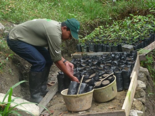 Forest guard growing seedlings in the tree nursery