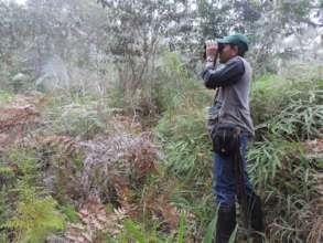 Jose Echavarria, Chestnut-capped Piha Reserve