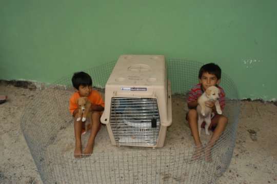 Children in charge of the puppies on the Galapagos