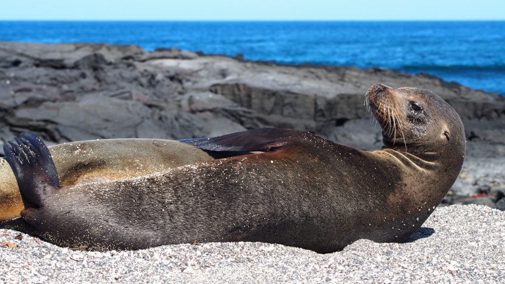 Save All Species on The Galapagos Islands