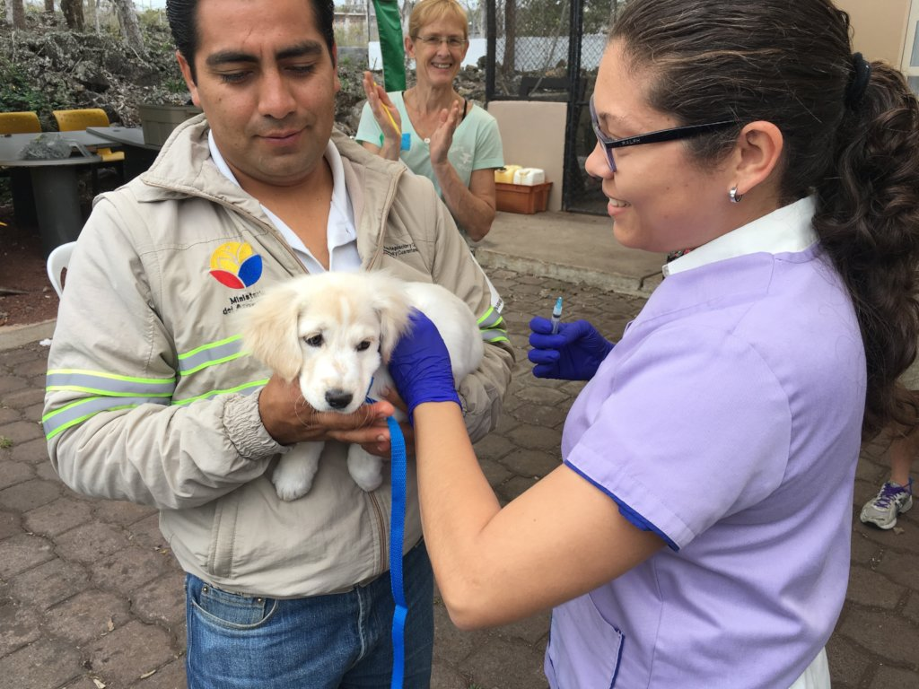 Sterilize Cats and Dogs on Galapagos