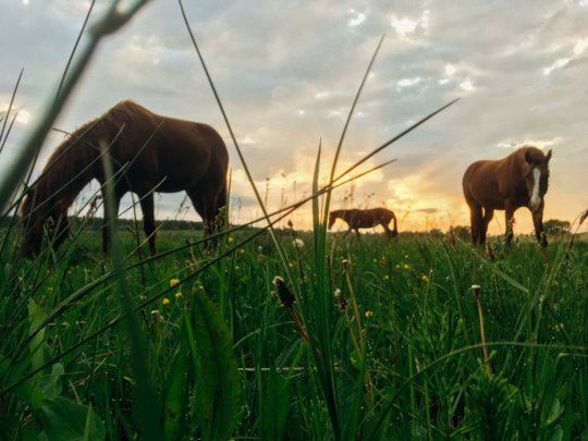 One of many mesmerizing mornings on the pasture