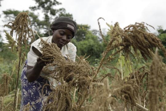 Support 650 women agro loans