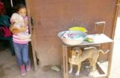 Help us spay&neuter +500 dogs in Venezuela