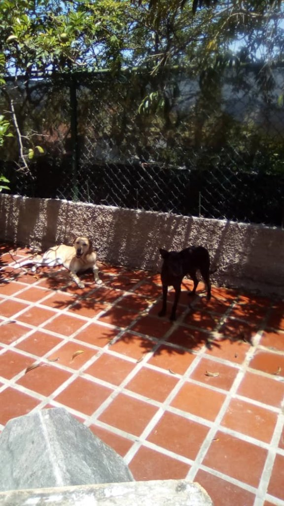 Let's spay 45 protected dogs in Venezuela