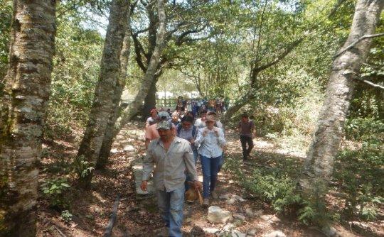 Nature Walk - Appreciation and Interpretation