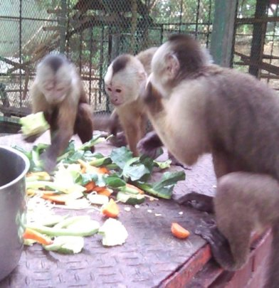 Lunchtime for the family of monkeys.