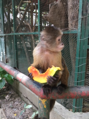 SAI Zoo Monkey Takes Time For Fruit Lunch Break