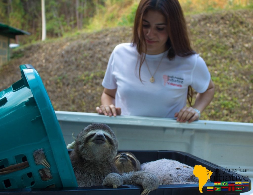 Endangered Animal Rescue Fund- Venezuelan
