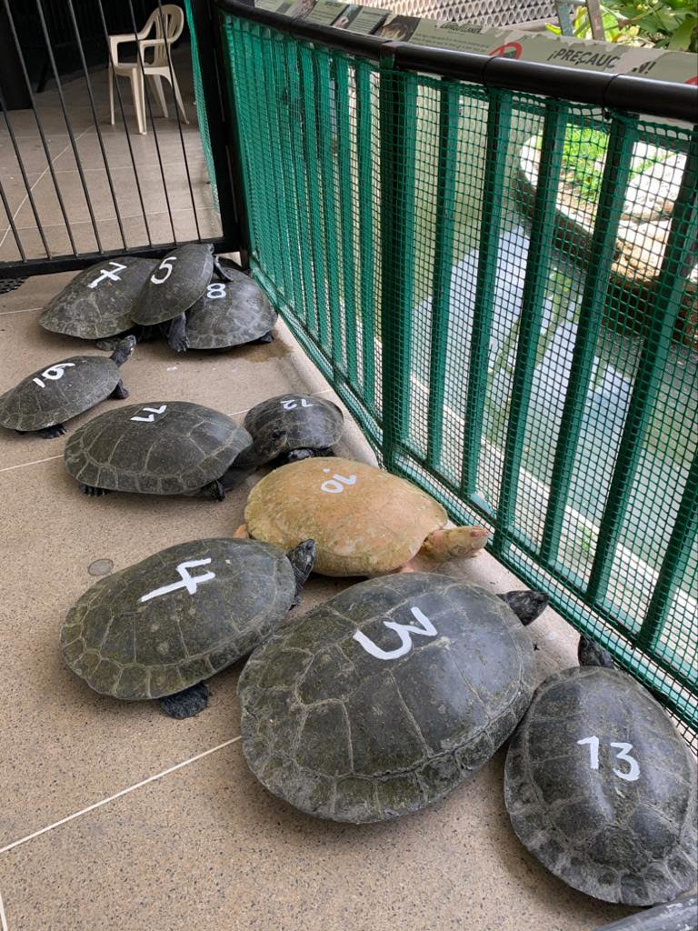 We've been taking care of a family of aged turtles