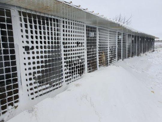 ROLDA Large shelter Feb 2020
