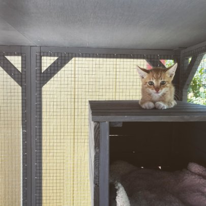 Pumpkinhead hangs out in the new cattery