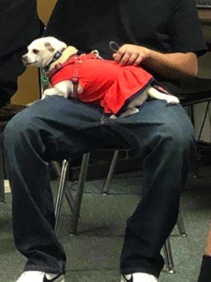 Therapy dog Teca visits teens at Gerber High