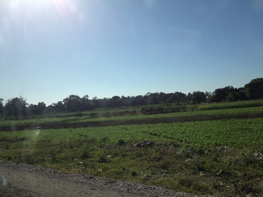 plowed field expanding food production