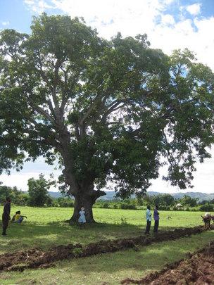 Ox-Plowed fields in Haiti