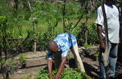 Plant Trees and Strengthen Communities