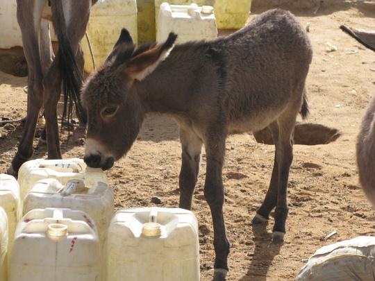 An additional donkey