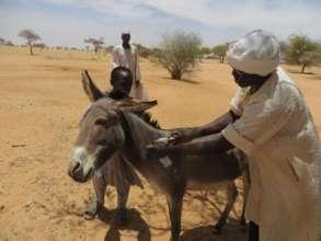 Donkey need veterinary care too