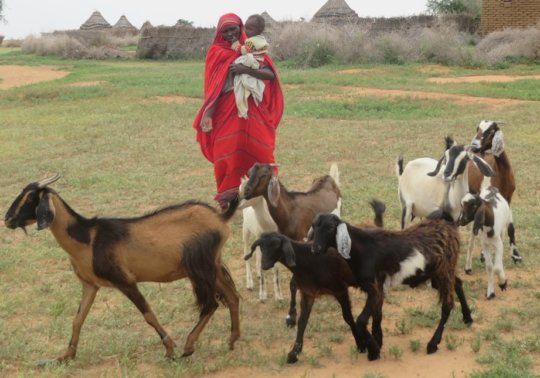 Mother with her flock of goats