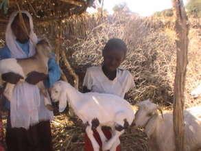 Goat Loans save lives, milk keeps children healthy